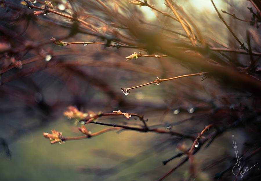 Rain drops on the branches.